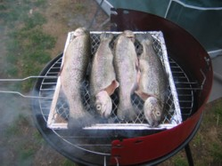 Look at these beautiful trout on the grill