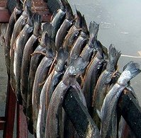 Arbroath Smokies hanging on the triangular kiln stick