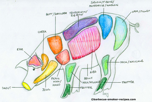 Butchers anatomy of a pig