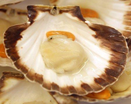 A prepared scallop in it's shell