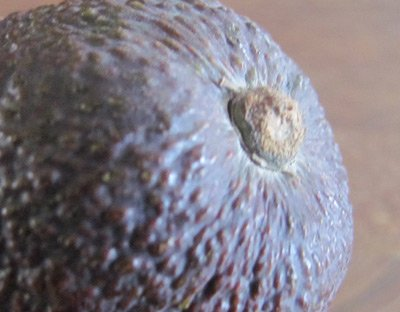 ripen avocado tip - how to tell when an avocado is ripe